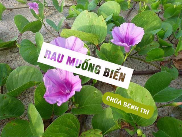 Cach Chua Benh Tri Bang Rau Muong