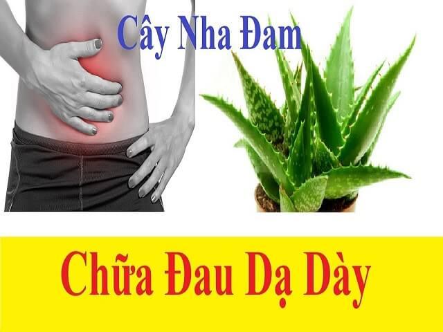 Cay Nha Dam Chua Benh Da Day 3